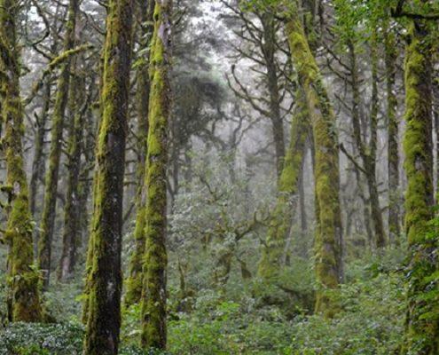 Valorar los servicios del bosque